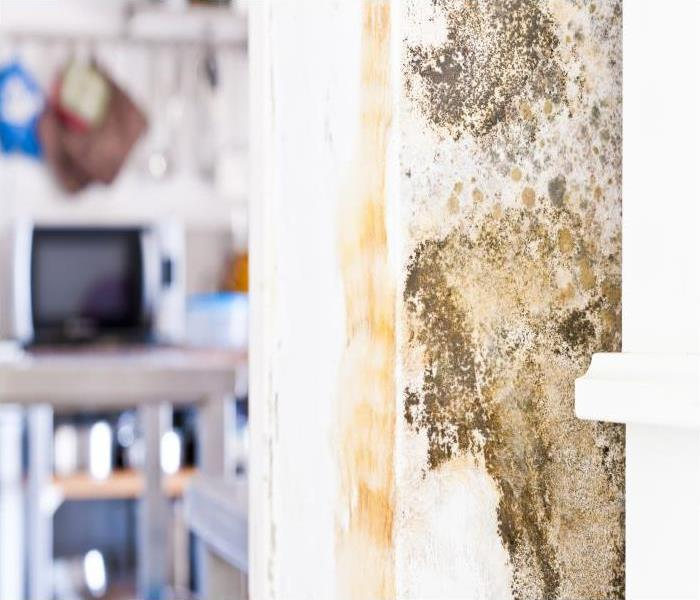 Mold Remediation The Real Truth About Mold Growth In Your Nashua Residence