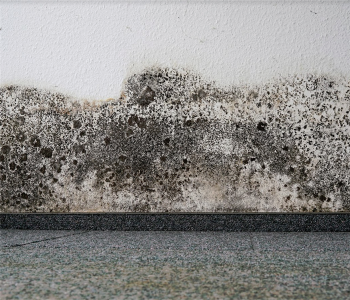 black mold growing up a wall