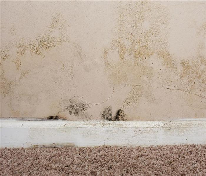 Mold Remediation Finding Mold in the Attic of Your Nashua Residence Leads to Control of the Situation