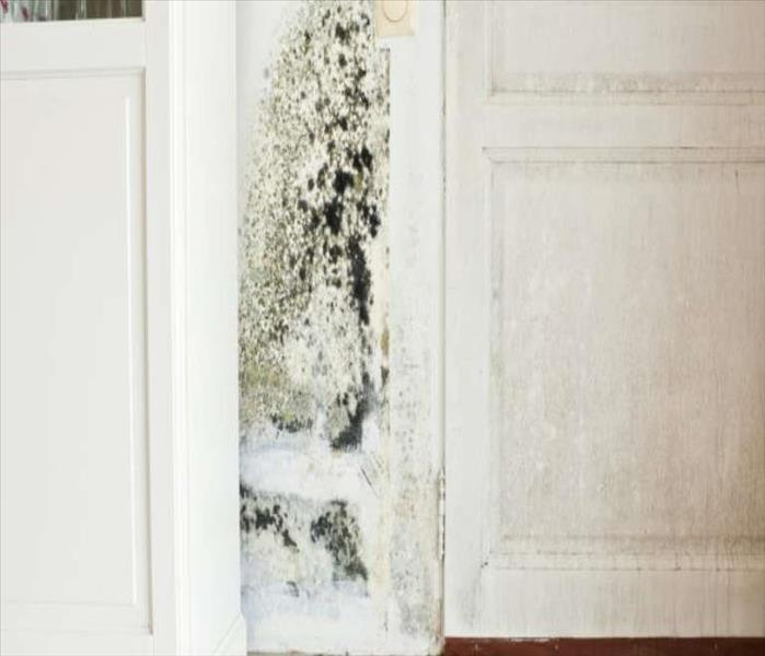 General What to do if your house has mold